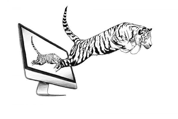 Tiger Scribble / Skizze
