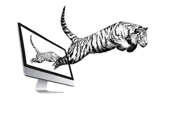 04_Monitor_Tiger_Illu_1000px