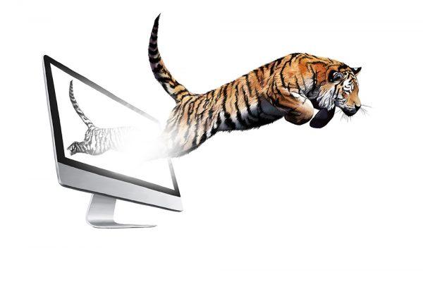 09_Monitor_Tiger_Illu_1000px
