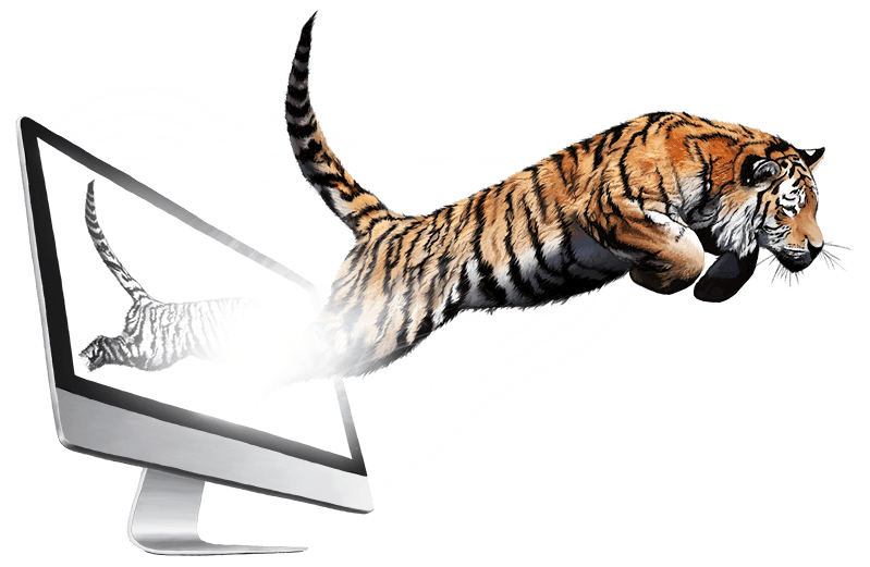 Von der Idee zur Wirklichkeit - Illustration, Tiger, Andrea Baitz, Digital Painting