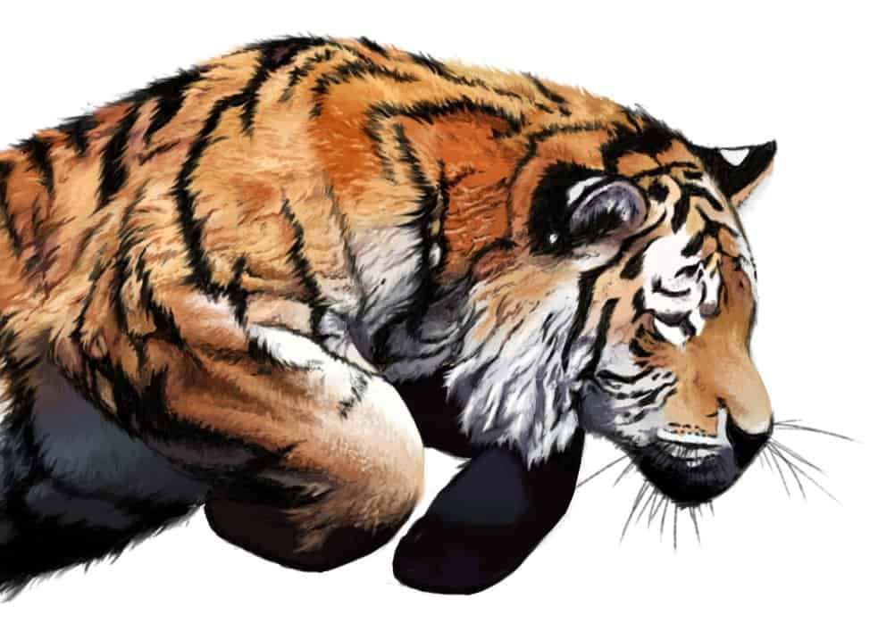Illustration, Digital Painting Tiger - Details
