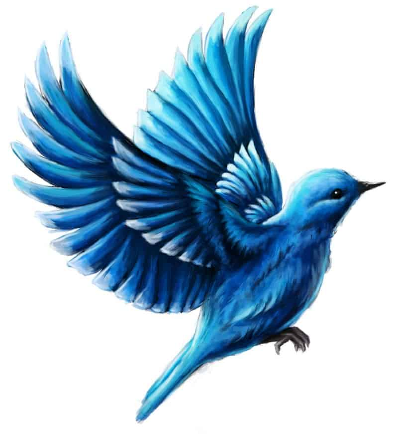 Illustration, Buchcover, Buchillustration - Der Blaue Vogel von Quigunaja, Illustrator Andrea Baitz, Eckernförde (Schleswig-Holstein), Raum Kiel, Rendsburg, Flensburg, Hamburg